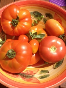 tomates de mon potager