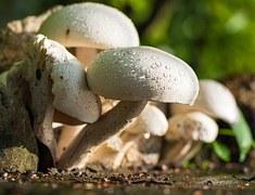 mushroom-372044__180